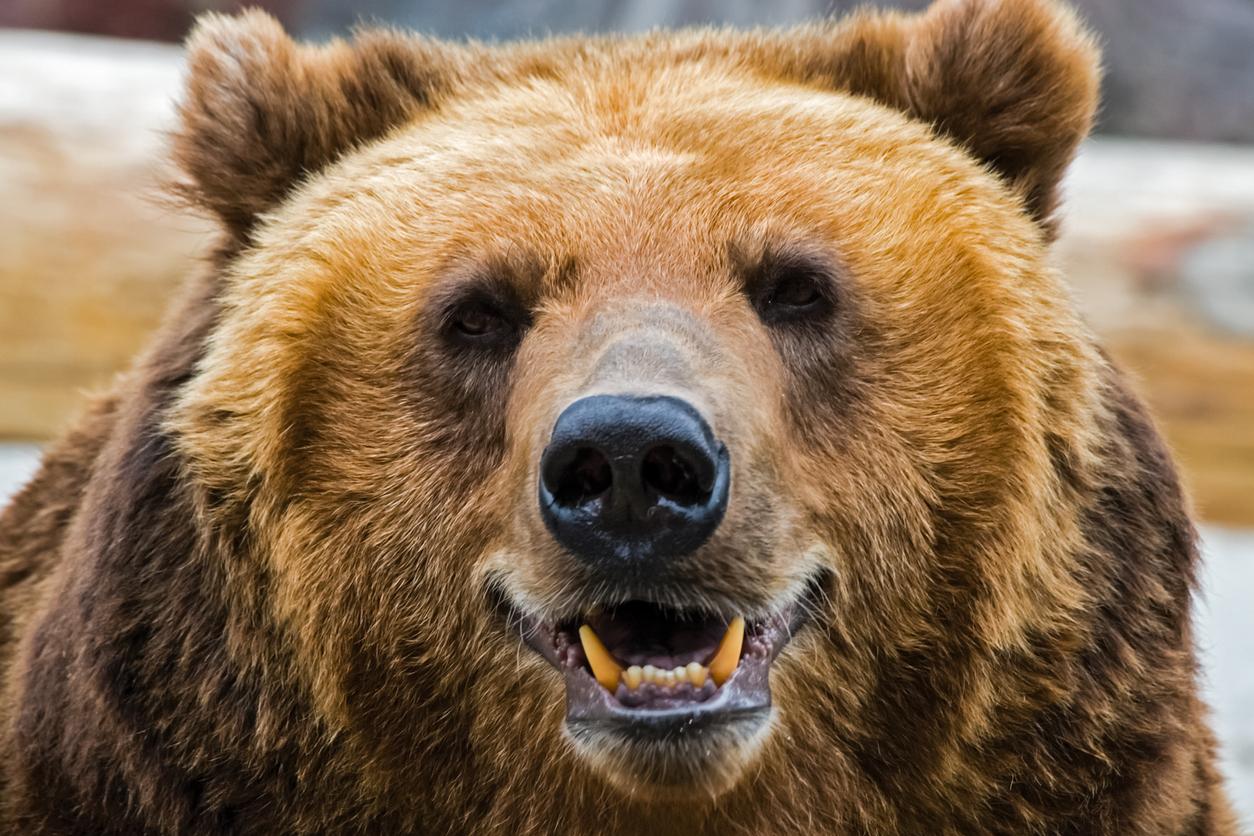 Boy Fights Bear, Boy Wins