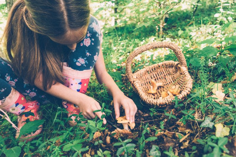 There is no excuse for this as there is a great variety of delicious wild food out there, and at a time when the cost of living is increasing dramatically, why not save a bit of cash and try some wild food instead?
