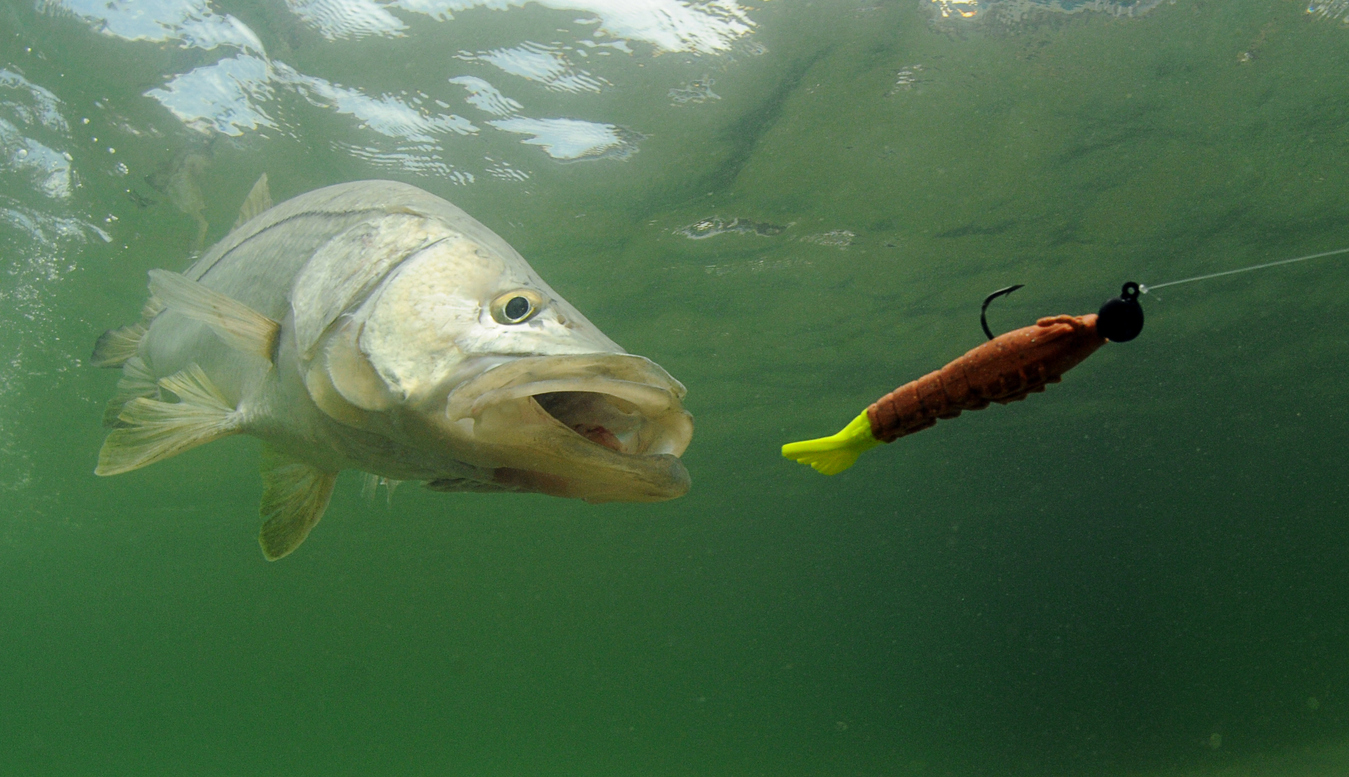 Check what is the right equipment for where and what you intend to be fishing