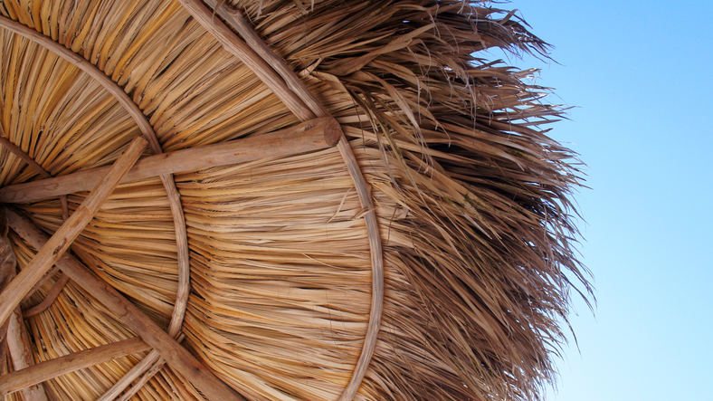 A palapa roof lasts about 20 years before it deteriorates to the point where it needs to be replaced.