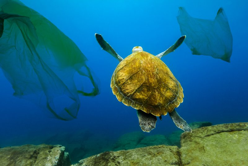 These plastic bags kill 100,000 marine animals every single year and are known to affect at least 267 different animal species