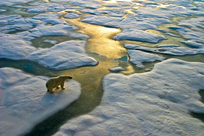 He wants us all to understand the urgency of this situation, explaining that human-influenced climate change is impacting ecosystems around the world