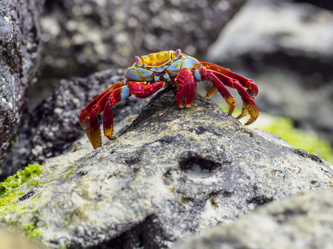 Rocky shores always hold fishes, crabs of various sizes or even eels.