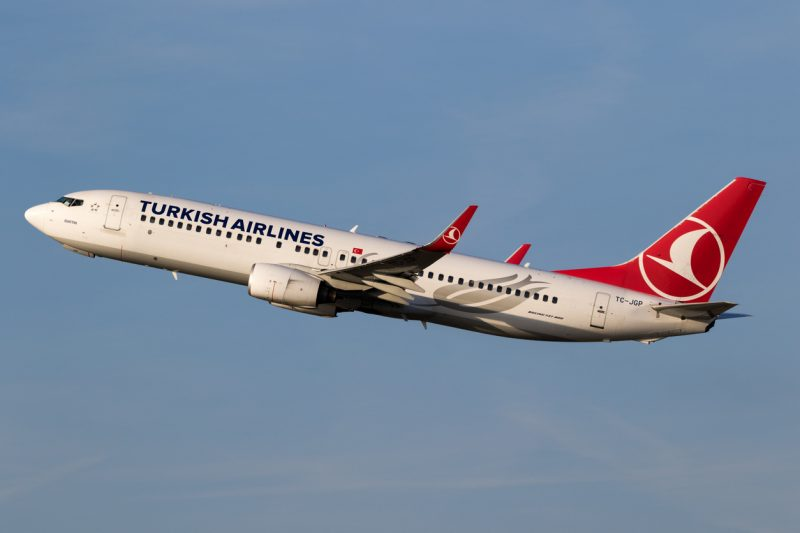World Animal Protection launched a petition against Turkish Airlines, hoping the airline would begin taking illegal smuggling more seriously