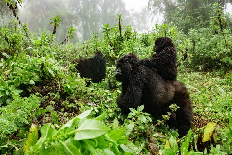 Virunga National Park is an official UNESCO World Heritage Site