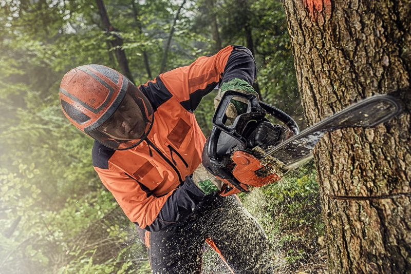 If you are cutting a tree this big, of course, you will have to cut it in large chunks