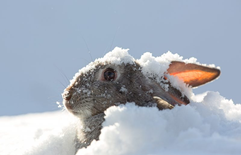 In general, animals such as rabbits and squirrels can be easily tracked by tracks in the snow