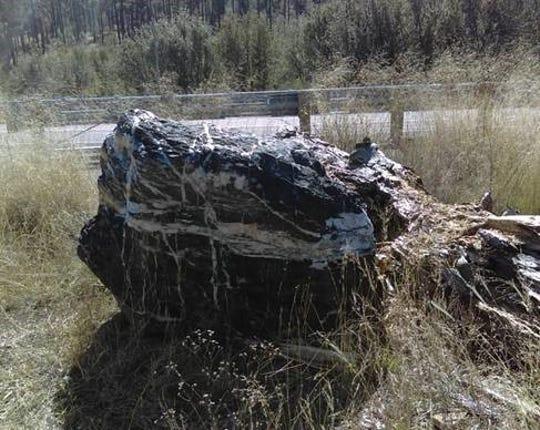 Photo: Prescott National Forest photo