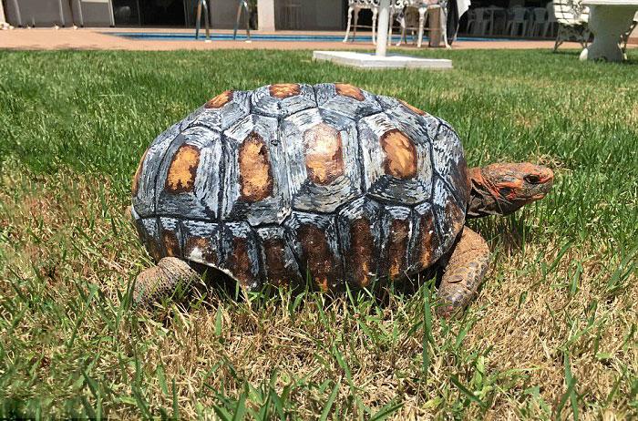 www.animalavengers.org