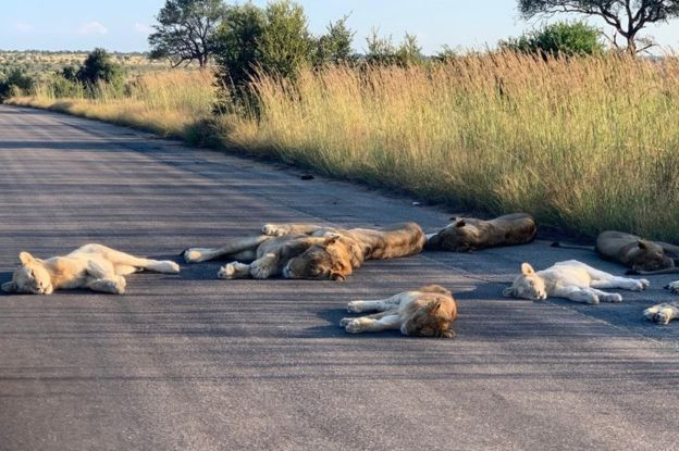 RICHARD SOWRY/KRUGER NATIONAL PARK